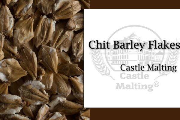 The Importance of Barley to Brewing Beer
